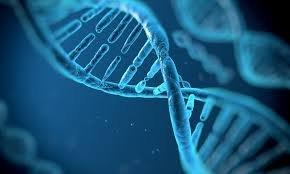 মানুষের জিনঘটিত রোগ নিরাময়ে কাজ করতে পারে ক্রিসপার ক্যাস-৯।